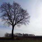 Lossersestraat thv hectometerpaaltje 0,8 01-03-2015 11.00